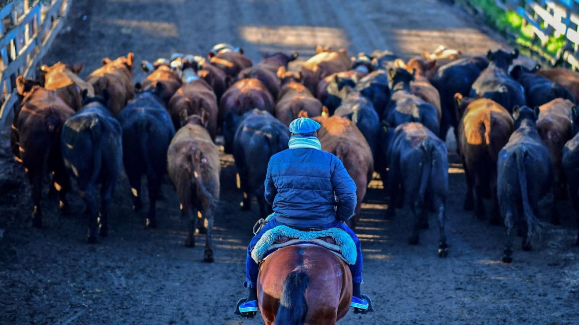 The Liniers Cattle Market is moving to Cañuelas, Buenos Aires Province, after more than a century in Mataderos.