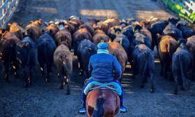 liniers cattle market