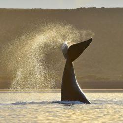 Comenzó la temporada de ballenas en Puerto Madryn, que se extenderá hasta diciembre.