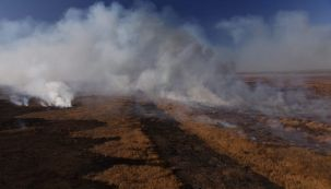 Incendios islas del Delta del Paraná