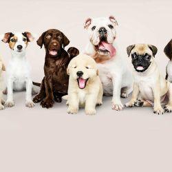 Cada raza de perro tiene sus propias particularidades.