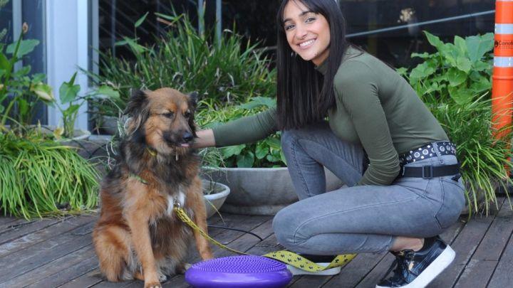 Propiocepción: ¿qué es y por qué es tan buena para nuestros perros?