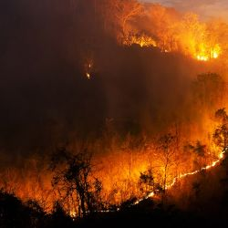 Los incendios forestales tienen en vilo a varios países europeos.