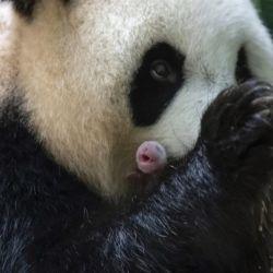 La feliz madre china junto a una de sus pequeñas crìas francesas.