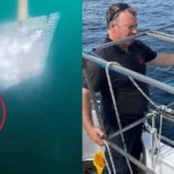 El extraño ejemplar fue avistado en las cercanías de las costas de Irlanda.