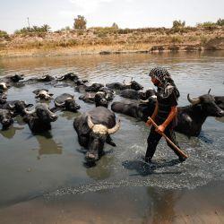Un pastor iraquí refresca sus búfalos en el río Diyala, en el distrito de Faziliah, al este de Bagdad.   Foto:Ahmad Al-Rubaye / AFP