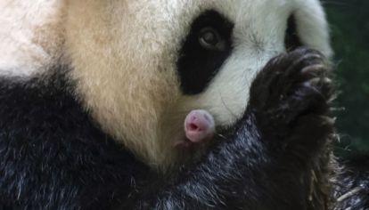 0802_oso panda