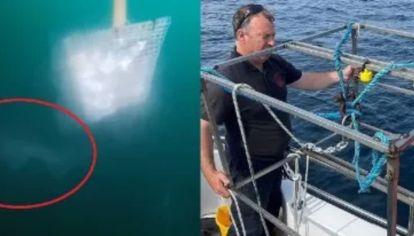 Avistan a un gigantesco tiburón prehistórico en las costas de Irlanda