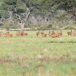 Es el único lugar en el mundo en el cual se lleva a cabo el avistaje del ciervo colorado en la Epoca de Brama.