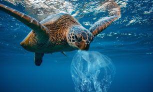 Tortugas marinas 20210803