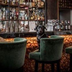 After Bark ofrece una amplia variedad de bebidas no alcohólicas para los canes.