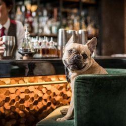 El particular pub también cuenta con guarderías para mascotas, servicios de entrenamientos y una cafetería para pe
