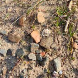 Los arqueólogos continuarán con su trabajo de campo en la zona sur del bajo de Los Saladillos.