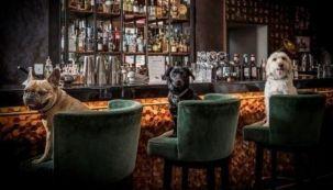0805_bar canino