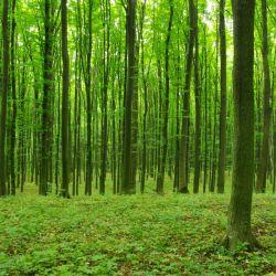 La intención es plantar 1.000.000 de árboles para 2022