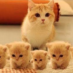 Desde el año 2002, cada 8 de agosto, los gatos celebran su día mundial.