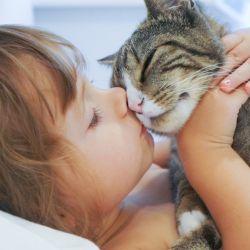 En el mundo hay cerca de 500 millones de gatos.