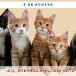 Aunque en muchos paìses se lo festeja en otra fecha, el 8 de agosto es el Día Internacional del Gato.
