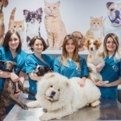En la Argentina hay cerca de 20.000 veterinarios.
