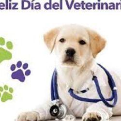 La fecha en homenaje a los veterinarios argentinos se celebra cada 6 de agosto.