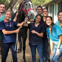 El rol del veterinario es fundamental en un país como la Argentina en donde cada vez es mayor el número de mascotas.
