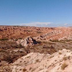 Los restos fósiles de esta mulita datan de entre unos 40 a 44 millones de años de antigüedad.