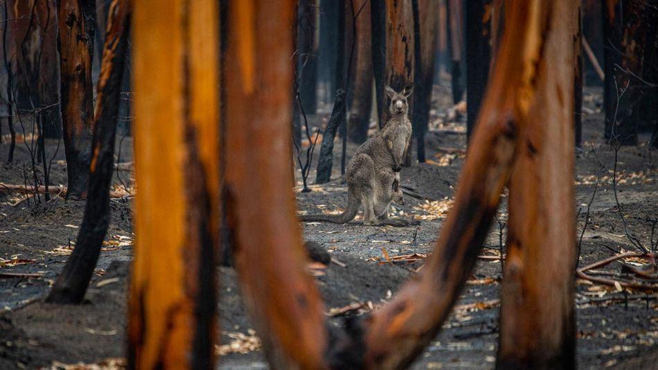 Incendios Forestales  en Australia 20210809