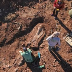 El hallazgo tuvo lugar a la vera de la Ruta Nacional Nº 237, a la entrada de Villa El Chocón, Neuquén.