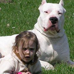 Si se controla su innata y fuerte naturaleza se puede disfrutar de la potencia física de este hermoso y fiel perro.