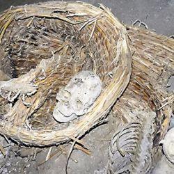 Todas las momias se encontraban en una posición similar a la fetal y en perfecto estado.