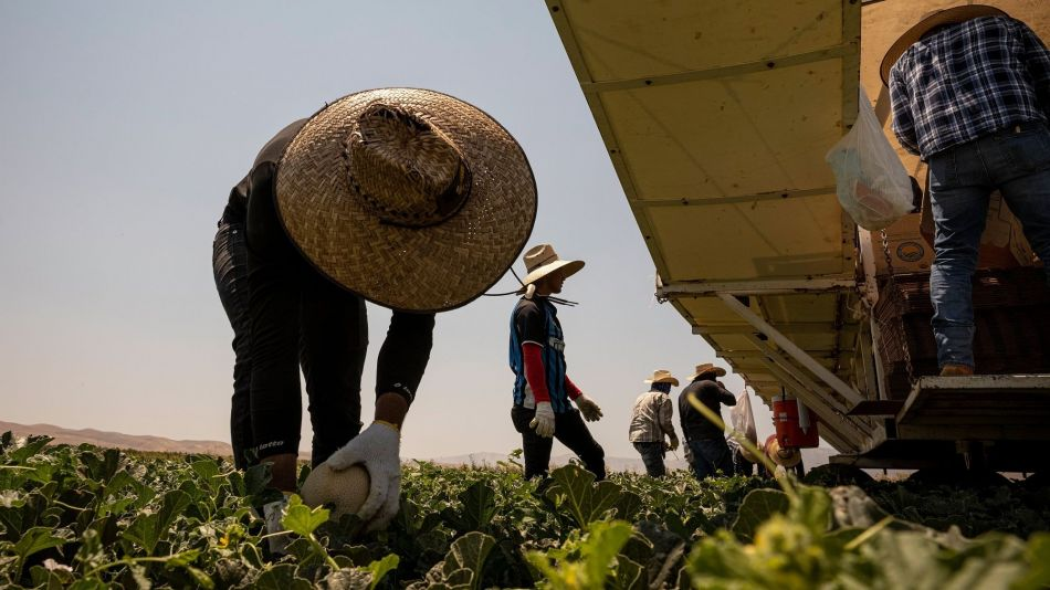Farm Operations As Californians Are Asked To Use Less Water And Power