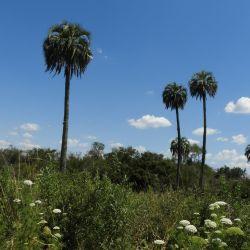 El futuro parque estará emplazado en el norte de Entre Ríos, en las cercanías de la ciudad de Federal