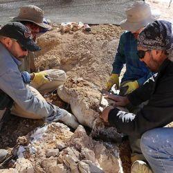 Los restos de este reptil marino fueron hallados en la isla Quiriquina, ubicada en la Región del Biobío.