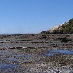 El hallazgo tuvo lugar en la isla Quiriquina, que está ubicada en la Región del Biobío.