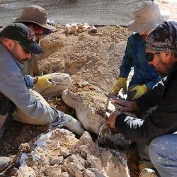 Los restos fueron encontrados por científicos de la Universidad de Chile.