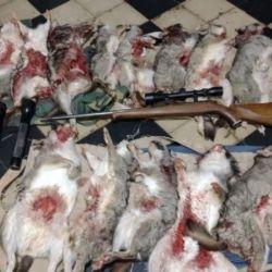 En total, los cazadores llevaban 16 vizcachas muertas y destripadas.