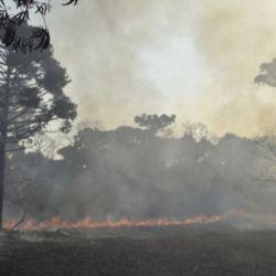 Para las autoridades locales se trata de una tragedia ambiental.