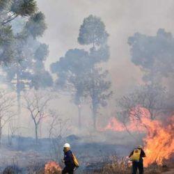 El fuego arrasó con 10 de las 92 hectàreas de extensiòn con las que cuenta el Parque Provincial de la Auracaria, en Misiones.