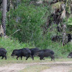Los animales fueron captados mientras paseaban tranquilamente por el interior de la reserva misionera.