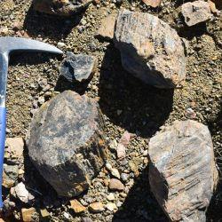 Los restos fòsiles hallados pertenecen a un reptil marino que habitó la región hace millones de años.