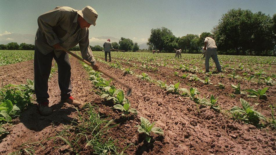Trabajadores rurales de economías regionales