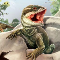 Los restos fósiles indican que este reptil vivió hace unos 230 millones de años.esEste Los restos  fóEl reptil hjalla dh l ejemplar hallm