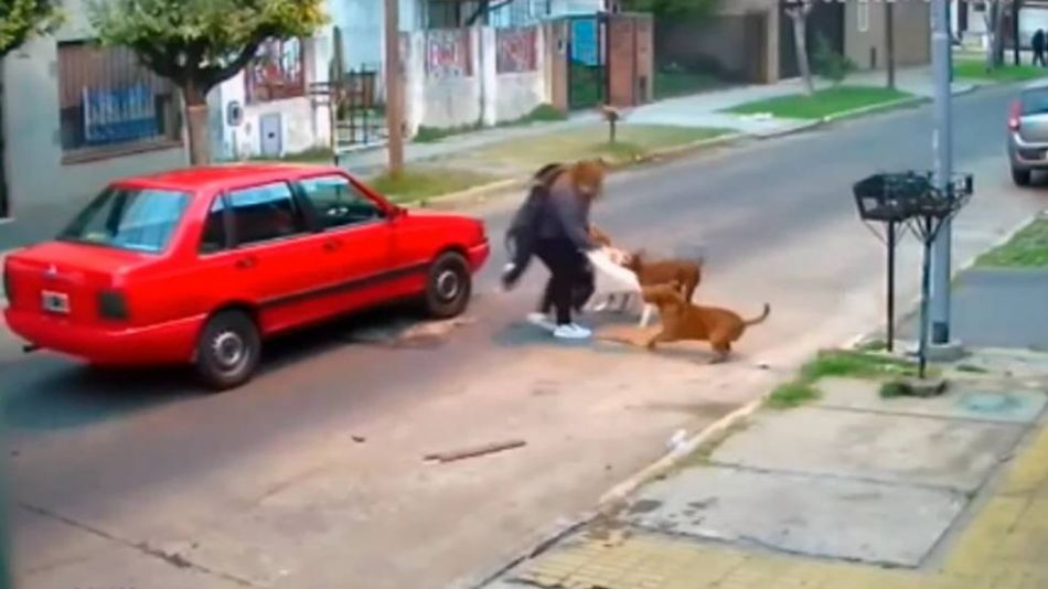 Tres perros pitbull atacaron a una mujer en la calle  20210826