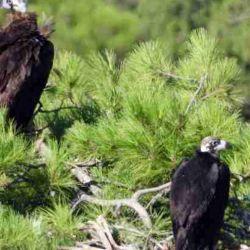 Tienen un rol más que fundamental en una variedad de ecosistemas.