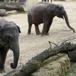El traslado de los animales desde Mendoza a Brasil, será vía Puerto Iguazú, Misiones.
