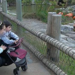 Las familias disfrutan cada espacio del Bioparque Temaikèn.
