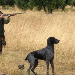 Las autoridades competentes se han encargado durante años de establecer temporadas y cupos de caza para las especies introducidas.