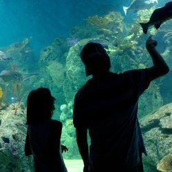 El acuario del Bioparque Temaikèn es uno de los principales paseos del predio de Escobar.