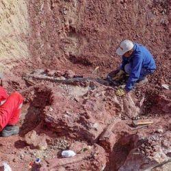 Los pescadores encontraron la parte superior del cráneo de un prehistórico mastodonte.
