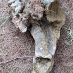 Los pescadores aceptaron entregar los restos fósiles al museo de Andino.